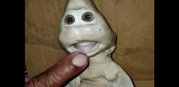 Indonésie : un bébé requin mutant né avec une «Tête humaine»