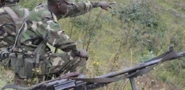 Casamance : L'armée Pilonne La Forêt De Mbissine