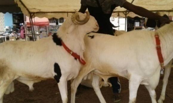 Gueule Tapée : Un Homme Mort électrocuté Dans Un Enclos à Mouton