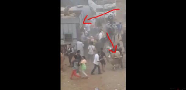 Des dizaines de personnes attaquent un camion pour voler des moutons